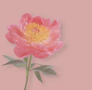 素描的概念及分类 素描风景花朵图片精选
