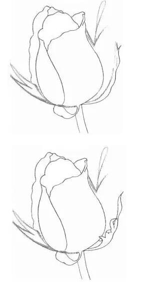 玫瑰花的素描画法图解 如何用铅笔画一朵玫瑰花