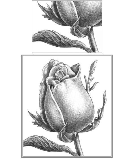 玫瑰花的素描画法图解 素描大神教你画玫瑰