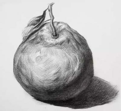 素描入门初学简单的静物素描图片