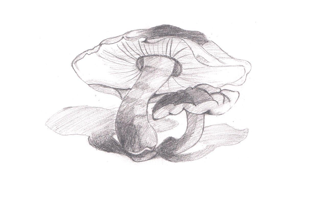 美术生学画画必须会学习的一部分就是素描,想要画好素描就要多练习图片