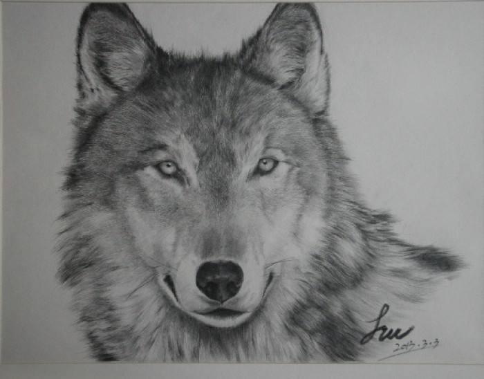 简单铅笔画动物图片大全